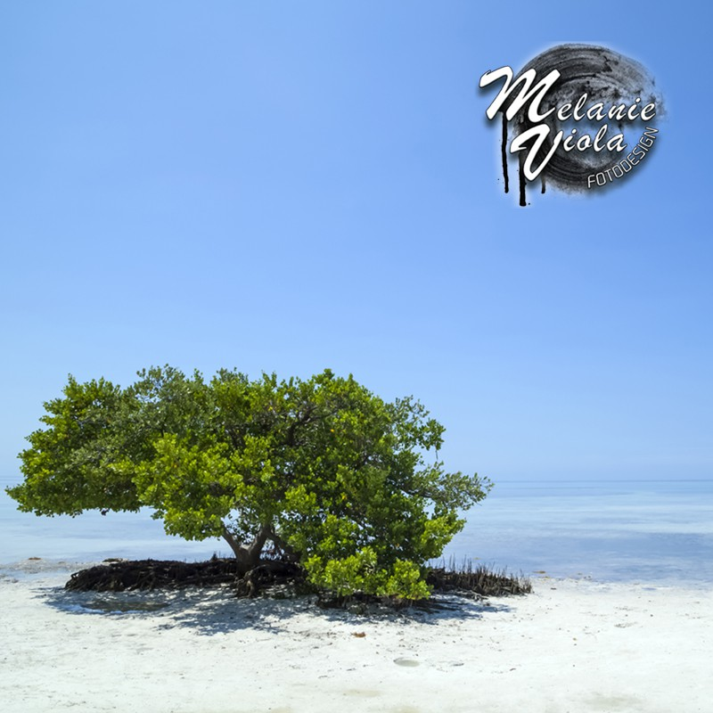 FLORIDA KEYS Lonely Tree | Posterlounge Onlineshop